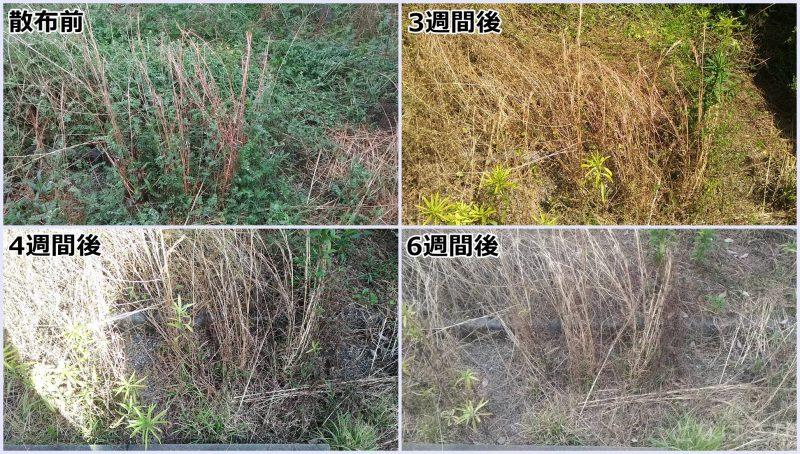 散布後の雑草の経過